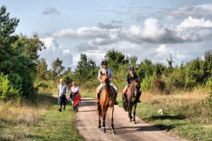 cheval_plateau_argentine